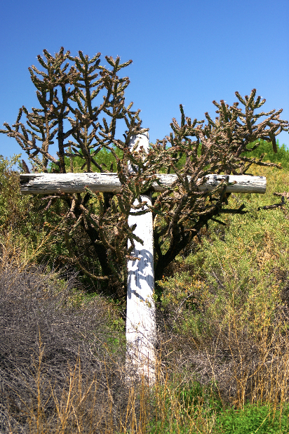 This cross had fallen into the cactus behind the old mission. It was even more interesting to photograph than the mission itself.